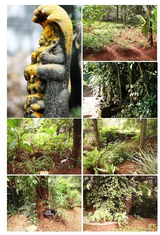 Nechiyil_Ayurveda_Vaidyasala_Garden.jpg